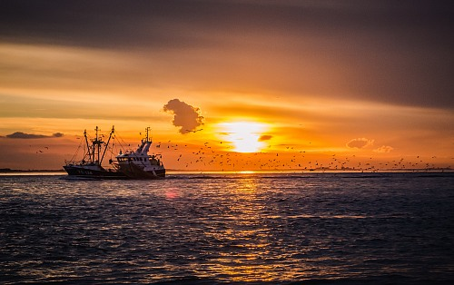 Vlissingen Fishingvessel entering the Westerschelde with a boat full of fish!<br /> Fishermen / fishing boats / fishing equipment Robin Hardeman